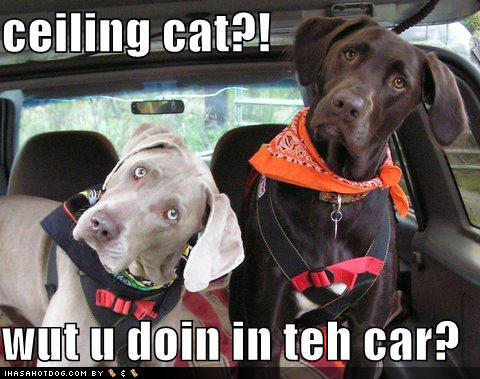 loldog-funny-dog-picture-ceiling-cat-in-teh-car.jpg