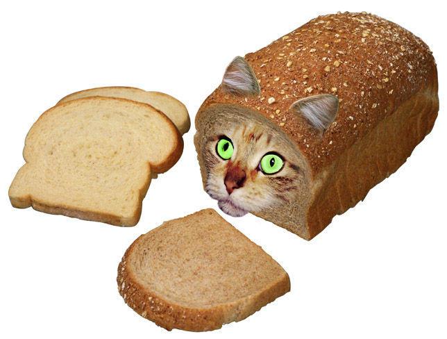 Cat_Bread.jpg