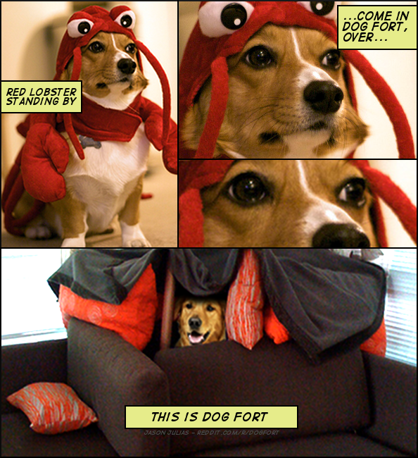 Dog Fort Know Your Meme