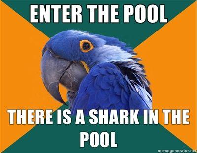 Enter-the-pool-There-is-a-shark-in-the-pool.jpg