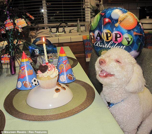 Birthday Cake Dog Meme ~ Birthday dog know your meme