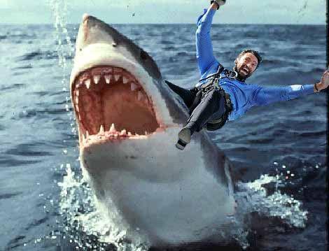 Hugh-shark.jpg
