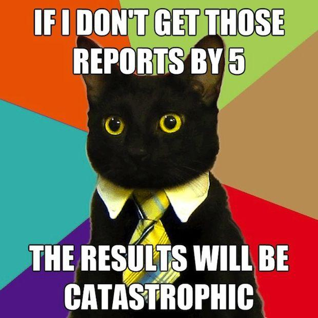 business-cat-01.jpg
