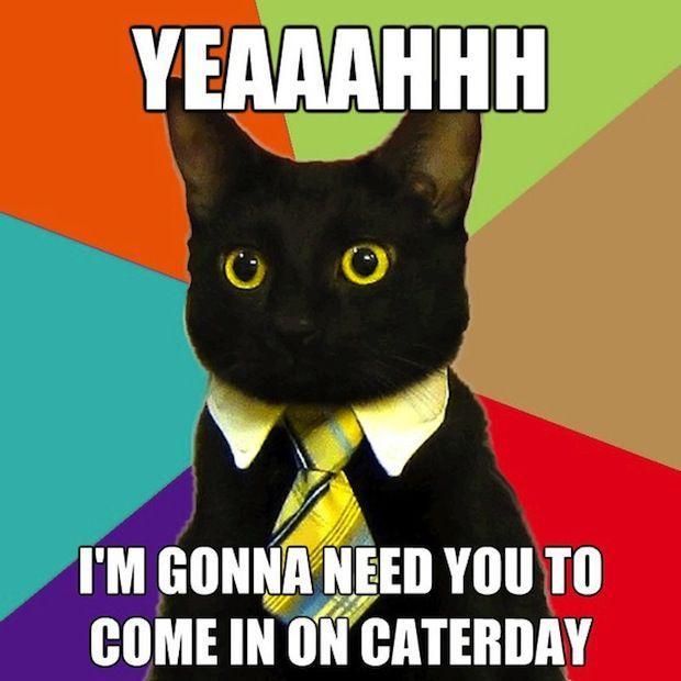 business-cat-05.jpg