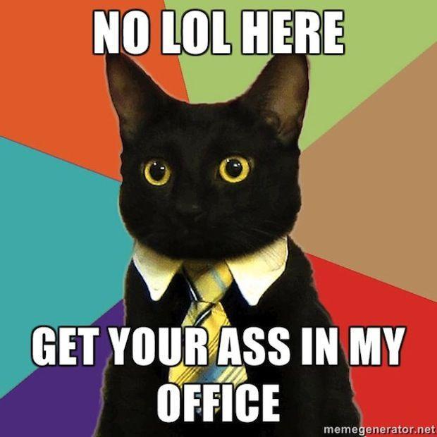 business-cat-07.jpg