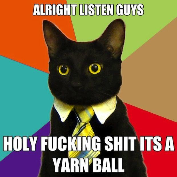 business-cat-12.jpg