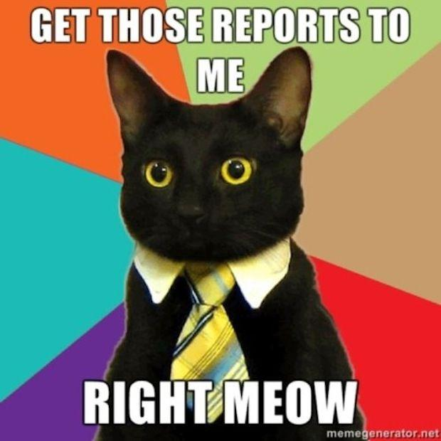 business-cat-19.jpg
