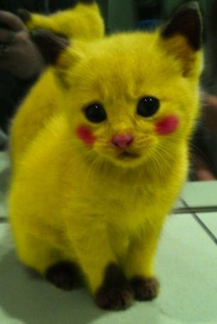Photoshopped-Pikachu-Kitten.jpg