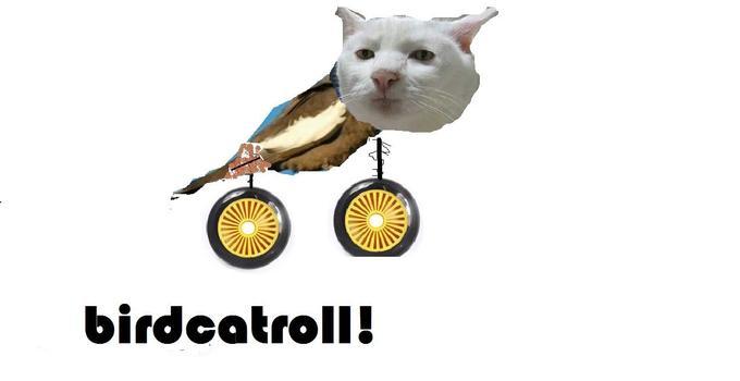 birdcatroll.jpg