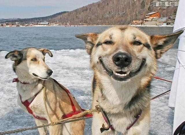 2X9nh stoner dog know your meme,Smiling Dog Meme