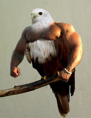 BirdsArms1.PNG