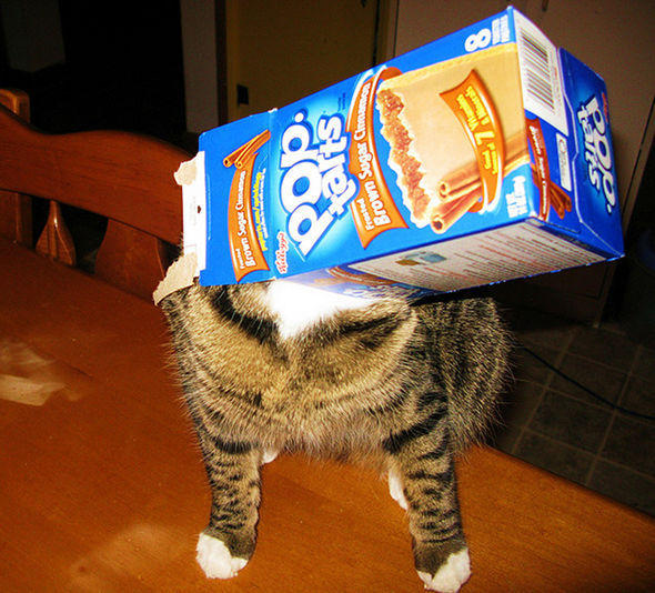 pop-tart-cat.jpg