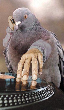 pigeonpg3.jpg