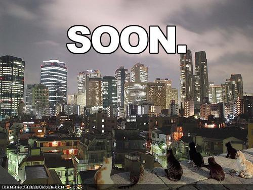 funny-pictures-soon-cats-city-skyline.jpg