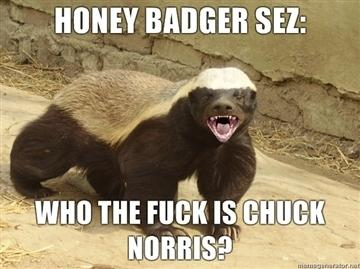 honey-badger-sez-25821-1298071096-0.jpg