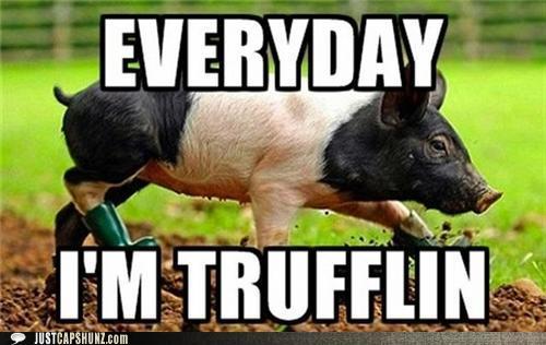 funny-captions-truffle-shuffle-yo1.jpg