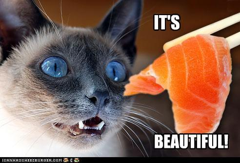 funny-pictures-cat-likes-salmon.jpg