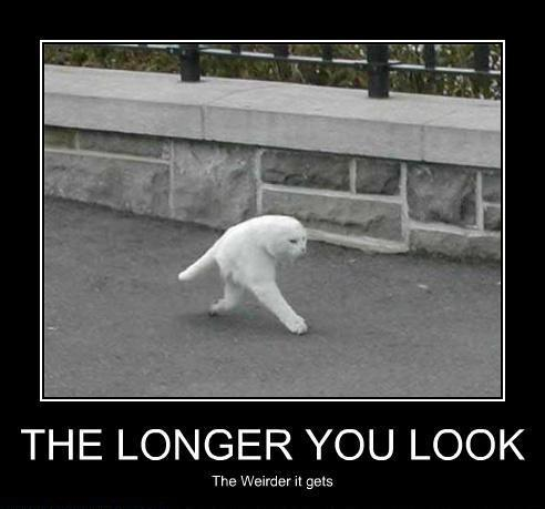 the-longer-you-look-the-weirder-the-two-legged-cat-gets.jpg