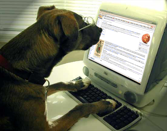 Dog_surfing_Uncyclopedia.png