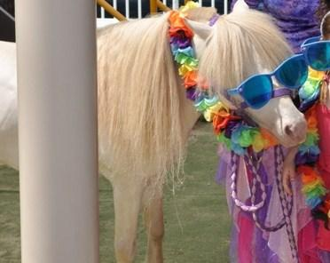 pony-sunglasses.jpeg