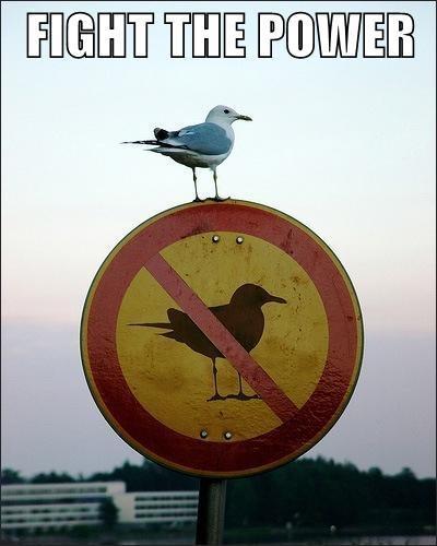 myth-bird-on-sign.jpg?1318992465