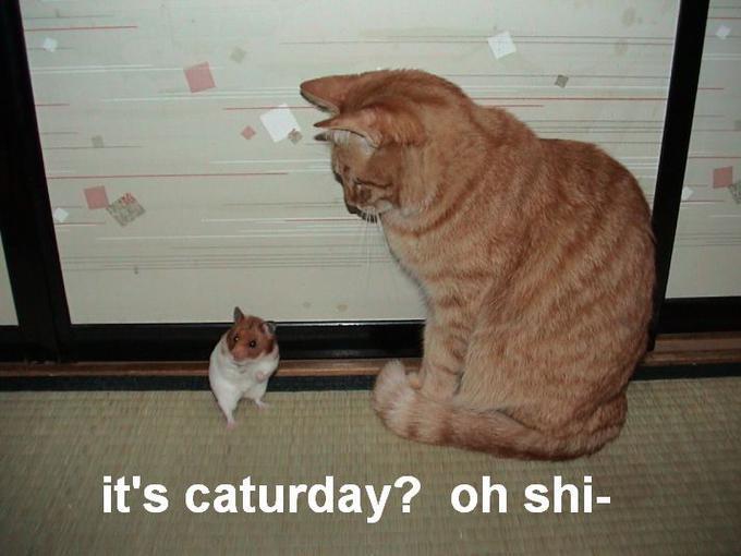 Fun-Cat-Caturday2.jpg