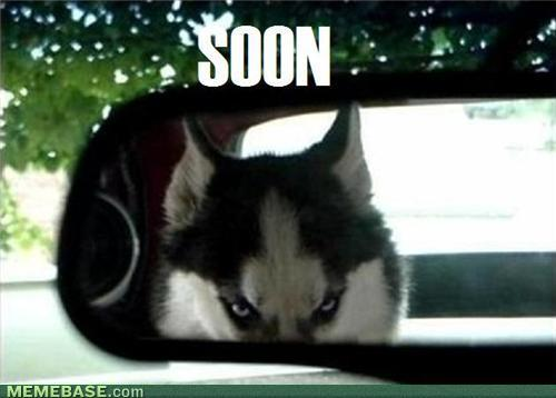 internet-memes-be-carefull-of-husky1.jpg