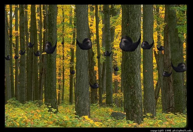 treebeards.jpg