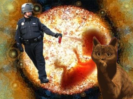cat_embrio.jpg