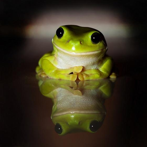 Approval Frog