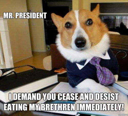 Lawyer Dog Makes Demand