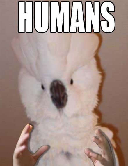 Humans Cockatiel