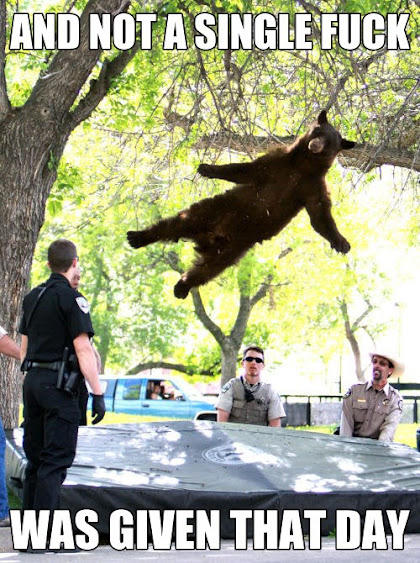 Tranquilized bear