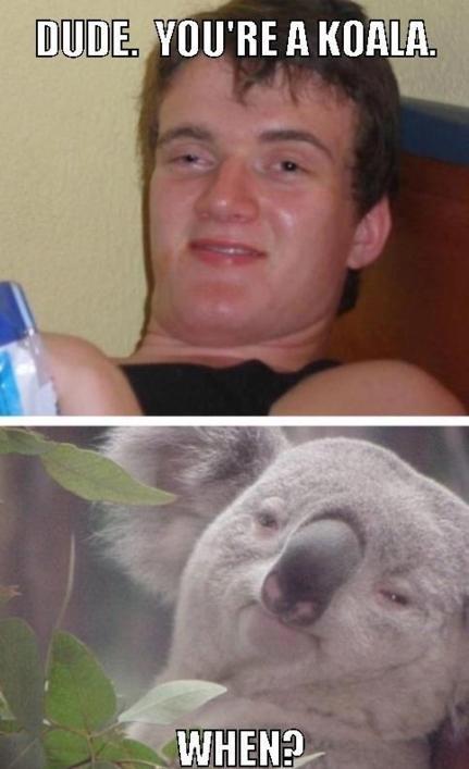 Dude. You're a Koala