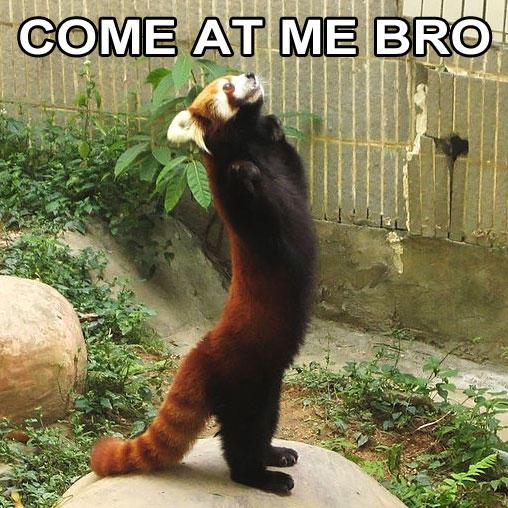 Come At Me Bro Movie Quote: Red Panda Quotes. QuotesGram