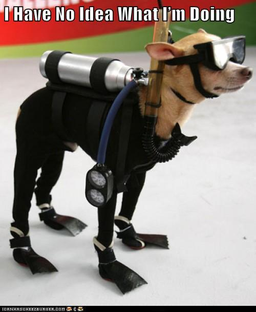I have no idea what i'm doing - Scuba Dog