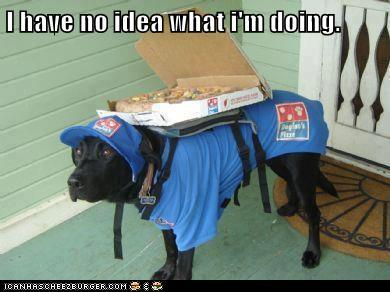 I have no idea what i'm doing - pizza delivery dog