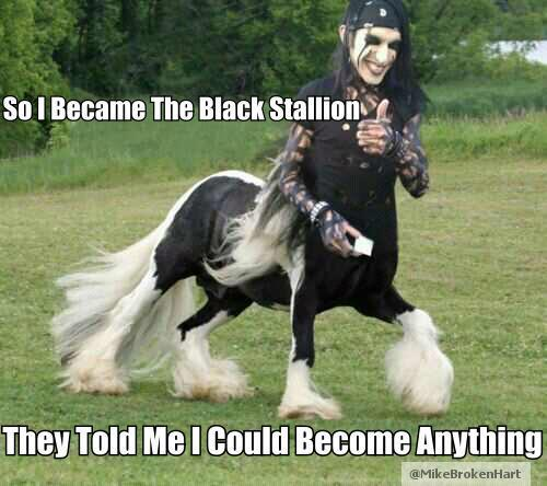Black Veil Stallion