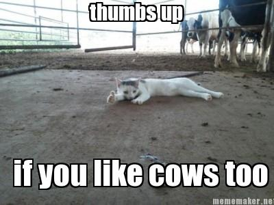 thumbs up cat with cows