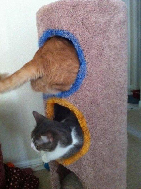 Cat House Portals