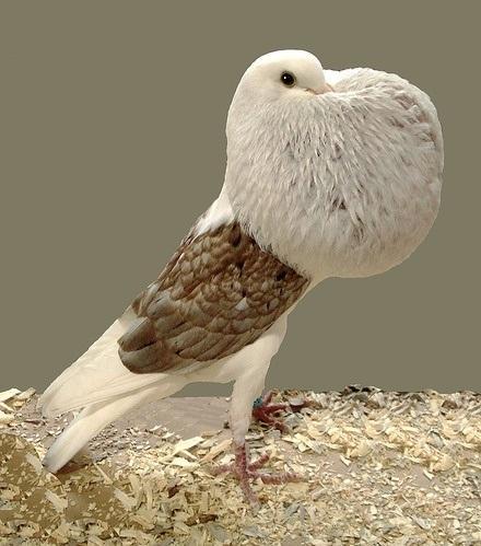 Forever Alone Bird