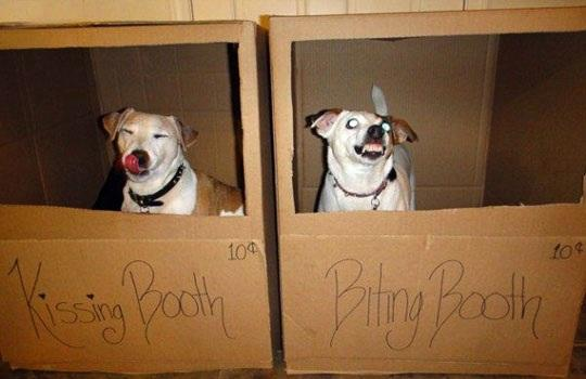 Dogs Kissing &amp; Biting Booth