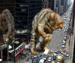 obey lol cat