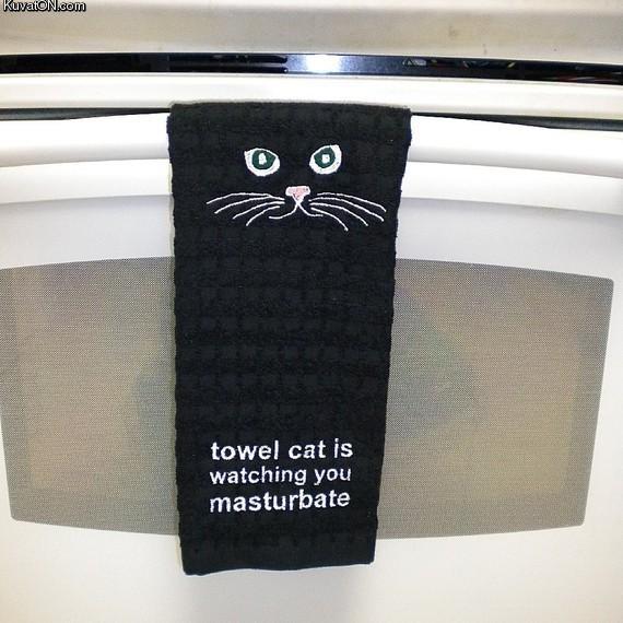 Towel Cat