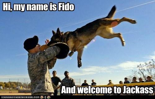Hi Fido