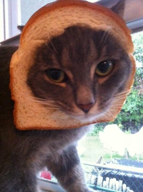 Breaded cat is breaded