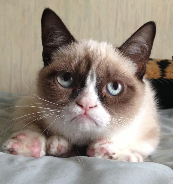 fd3 grumpy cat know your meme,Meme Grumpy Cat
