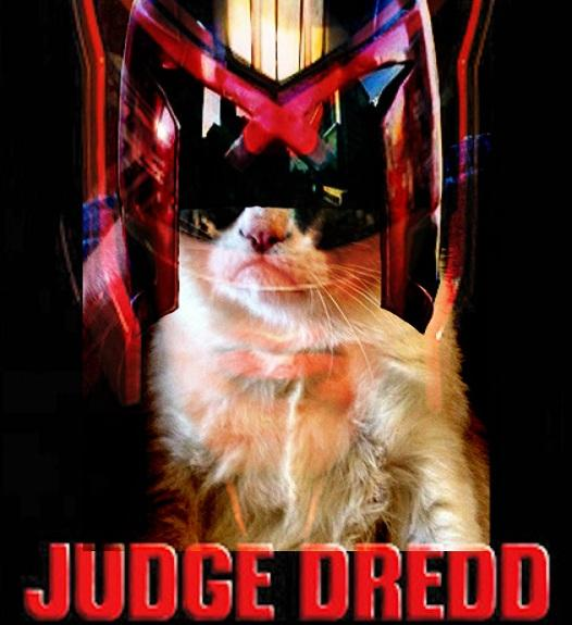 judge grumpy dredd cat