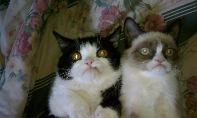 grumpy cat and her brother