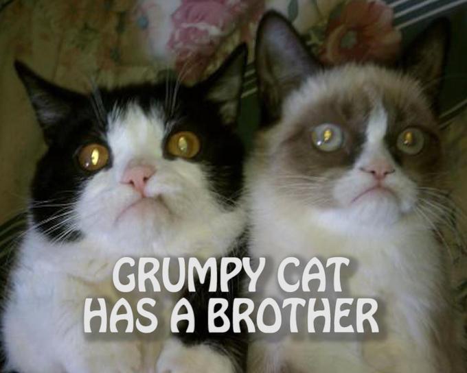 GRUMPY CAT HAS A BROTHER